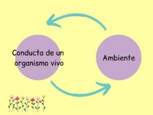 Relación conducta- ambiente.